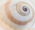 Sea shell swirl macro shot Royalty Free Stock Image