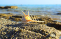 Sea Shell With Thorns On Sea B...
