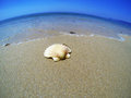 Sea shell in a wide angle view in summer time Stock Image
