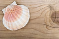 Sea shell on a wood wooden board Royalty Free Stock Photography