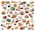 Sea-shells Stock Image