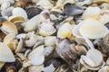 Sea shells abstract texture of con the beach Stock Photo