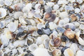 Sea shells abstract texture of con the beach Stock Images