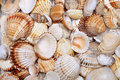 Sea shells background vacation texture Royalty Free Stock Image
