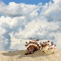 Sea shells on a beach sand Royalty Free Stock Photo