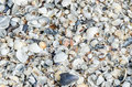 Sea shells in the beach sand close up texture Stock Photography