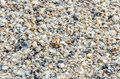Sea shells in the beach sand close up texture Stock Photos
