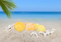 Sea shells and coconut palm leaf on sand beach background collec Royalty Free Stock Photo