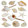 Sea shells collection different isolated on white background Stock Images