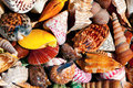 Sea shells colorful different shapes and colors Stock Photo