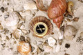 Sea Shells and Compass Royalty Free Stock Photo