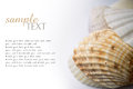 Sea shells with easily removable sample text Stock Image