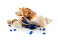 Sea shells isolated on white background collection with blue crystals decorative diamonds decorative composition Royalty Free Stock Images