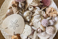 Sea Shells Plate Royalty Free Stock Images