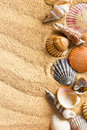 Sea shells on sand the Stock Photo