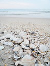 Sea shells with sand as background Stock Photography