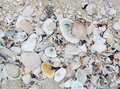 Sea shells with sand as background Royalty Free Stock Images