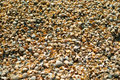 Sea shells on sand as background shallow dof Royalty Free Stock Photography