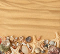 Sea shells and sand background Royalty Free Stock Photo
