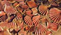 Sea shells on sand background red broken Stock Images