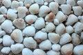 Sea shells sand border