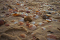 Sea shells in the sand a close up of natural pile of with them great for wall papers and backgrounds Stock Photography