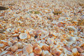 Sea shells in the sand a close up of natural pile of with them great for wall papers and backgrounds Royalty Free Stock Photo