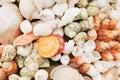 Sea shells / seashells - beach texture Royalty Free Stock Images