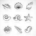 Sea shells and snail vector collection of Stock Photography