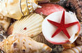 Sea shells and star Royalty Free Stock Photo