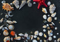 Sea shells and star fish on the sea pebbles in summer Royalty Free Stock Photo