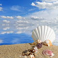 Sea shells and starfish on a beach sand Royalty Free Stock Photo