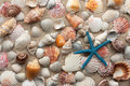 Sea shells and starfish on sand Stock Photography