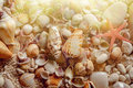 Sea shells and starfish on the sand Royalty Free Stock Photo