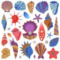 Sea Shells and Starfishes Collection Set Royalty Free Stock Photo
