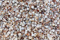 Sea shells on summer sandy beach. Tropical background with sea shells. Cockle-shell collected on coast. Wall build of sea shells Royalty Free Stock Photo