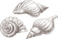 Sea shells vector image of the three big seashells Royalty Free Stock Photo