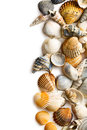 Sea shells on white background Royalty Free Stock Photos