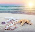 Sea shore assorted starfish and shells on a beach main focus on first starfish Stock Photography