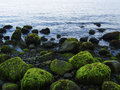 Sea shore with blue water and rippled water. Mossy stones on volcanic beach. Royalty Free Stock Photo