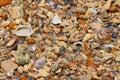 Sea Shore Pebbles, Stones, Cor...