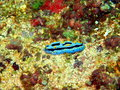 Sea slugs of the philippine sea surprising underwater world island mindoro slug Stock Photos
