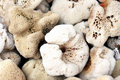 Sea Sponges Stock Images