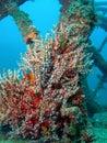 Sea Spray Stock Images