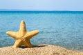 Sea star Royalty Free Stock Photo