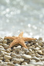 Sea star on the beach Royalty Free Stock Photo