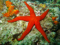 Sea star beautiful marine life on the coral reef and Royalty Free Stock Image