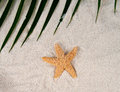 Sea star with sand Royalty Free Stock Images