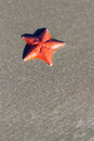 Sea star on sand background bat beach california coast usa Stock Photos