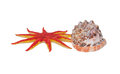 Sea star and seashell Stock Images